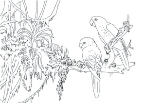 Free colouring page - Golden Conures II - World Parrot Trust