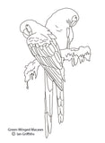 Free colouring page - Green-winged Macaw - World Parrot Trust