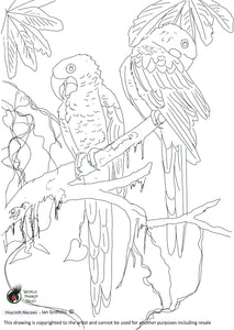 Free colouring page - Hyacinth Macaws - World Parrot Trust