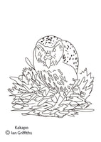Free colouring page - Kakapo - World Parrot Trust