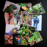 *NEW* Cards/Notelets - 12 cards by Corey Raffel - World Parrot Trust