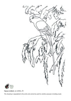 Free colouring page - Papuan Lorikeet - World Parrot Trust