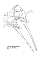 Free colouring page - Plum-headed Parakeet - World Parrot Trust