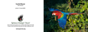 Cute and cuddly plush Toy - Scarlet Macaw. small - World Parrot Trust