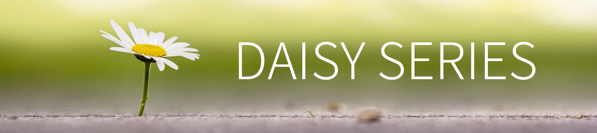 Enlarge - Daisy