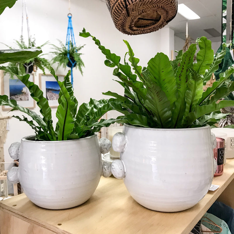 Ceramic Pompom Pot Planter