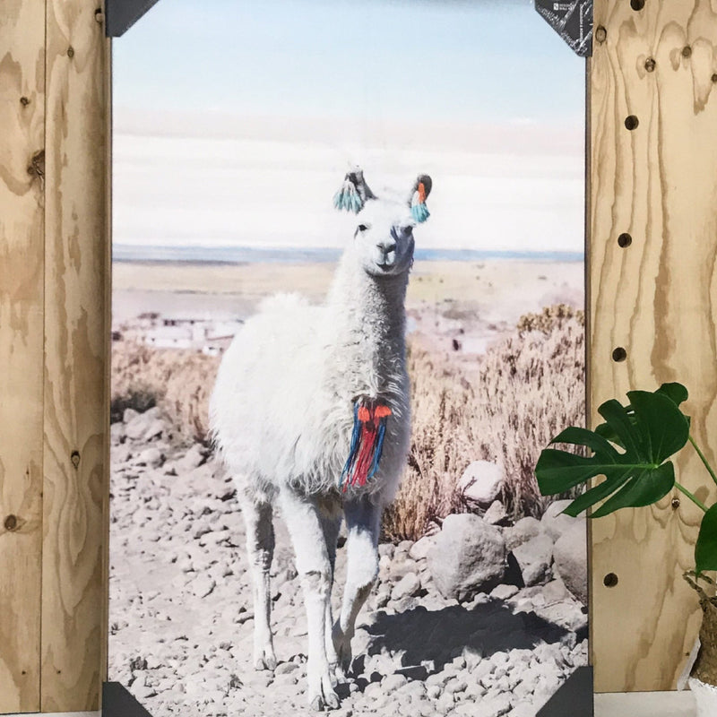 Larry Llama Canvas Print - Oak Look Frame