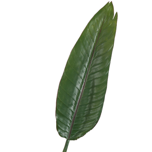 Banana Leaf Single Stem