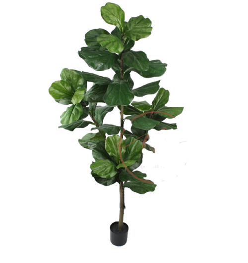 154cm Large Fiddle Leaf Fig Tree - Artificial