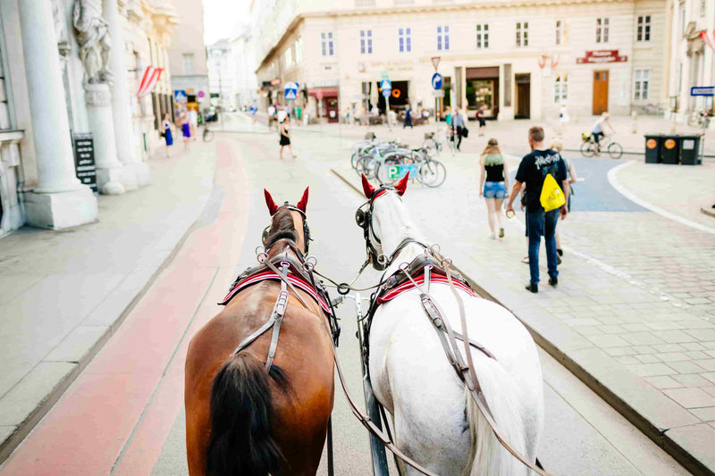 Two horse carriage riding throught Vienna