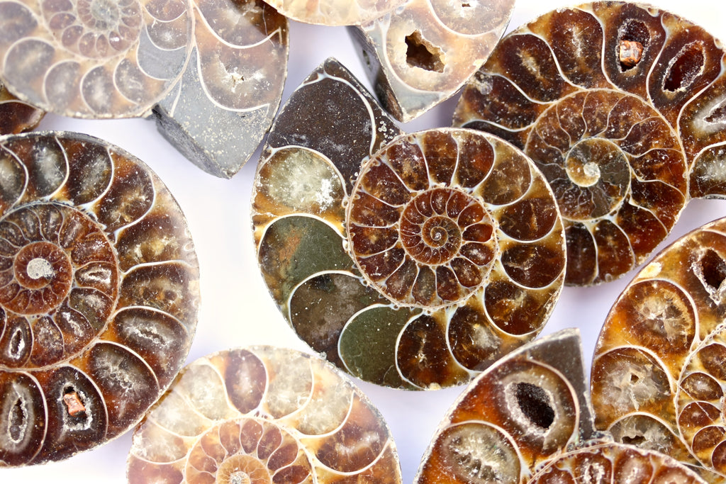 Natural Ammonite Fossil Beads