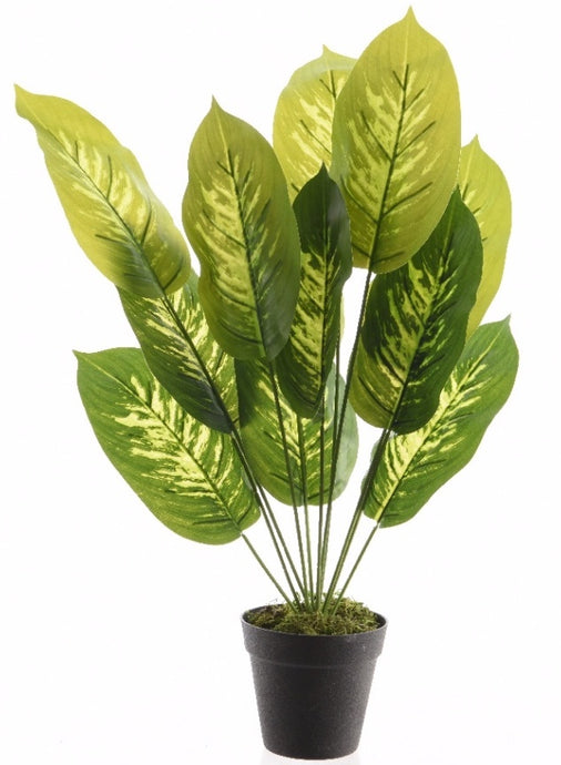 EVERGREEN PLANT IN POT LARGE 50CM