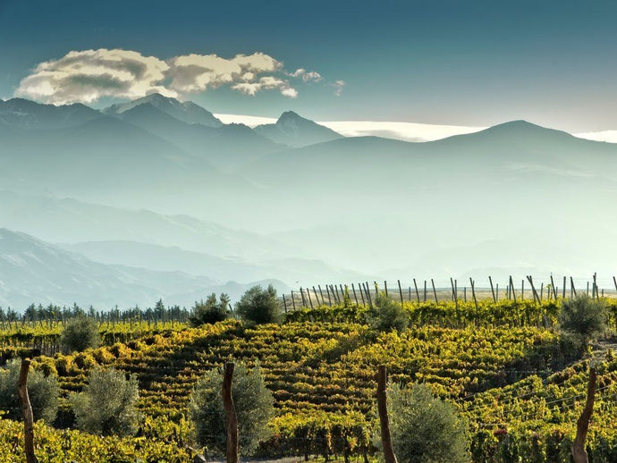 Magical Mendoza - The Land of Sunshine and Wine