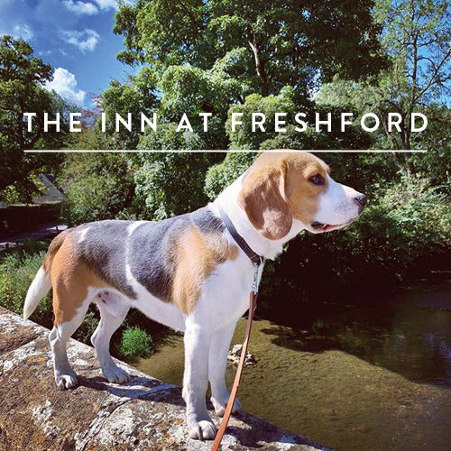 Enjoying The Inn at Freshford – one of the best dog walks around Bath.