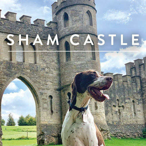 Enjoying Sham Castle – one of the best dog walks around Bath.