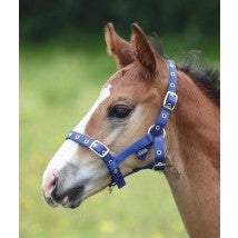 Shires Foal Headcollar - 4 Colours