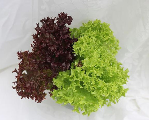 Red/Green leaf lettuce