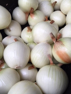 Large Candy Onion