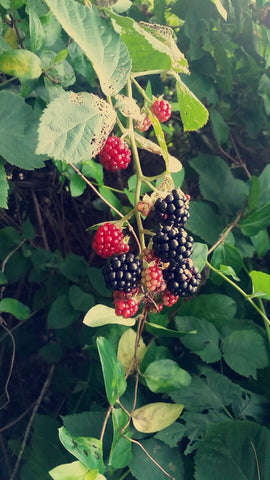 tame black berrys