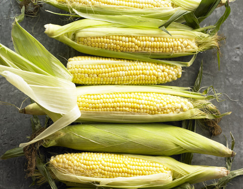 Indiana Sweet Corn