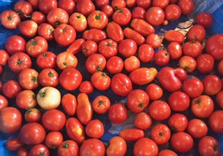 Field Grown Red Tomatoes