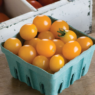 Yellow Cherry Tomatoes (1 pint)