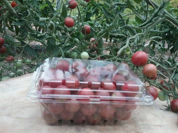 1 Qt Heirloom Black Sweet Cherry Tomatoes