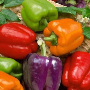 Small Mixed Bell Peppers (quart box)