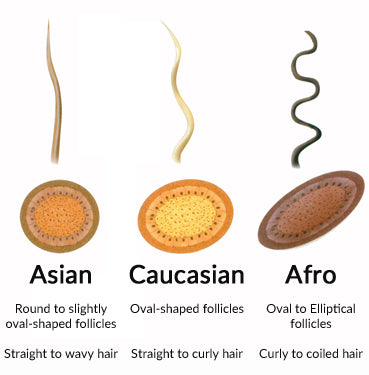 Different race Hair growth rate and follicle shape