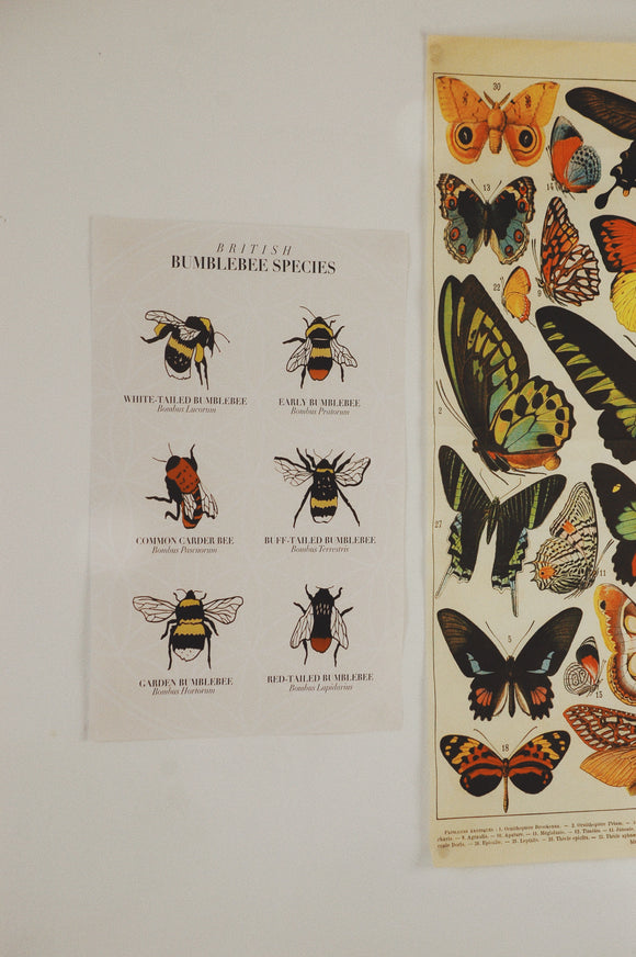 British Bees Poster