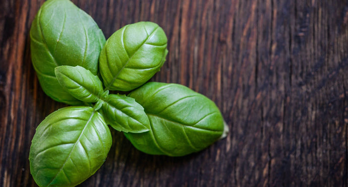 What Are The Benefits Of Wild Basil?