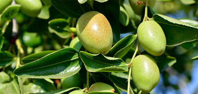 6 Incredible Jojoba Skin Benefits