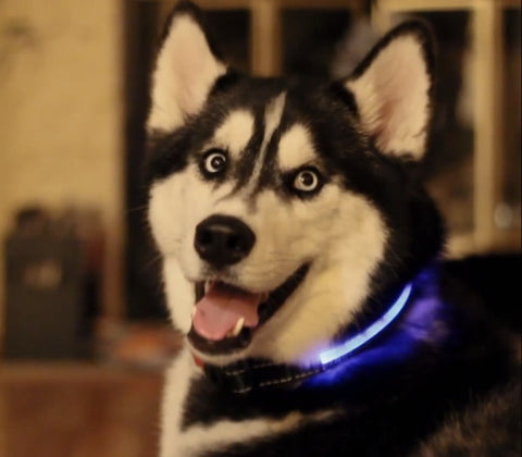 LED USB Rechargeable Collar - My Loving Pets
