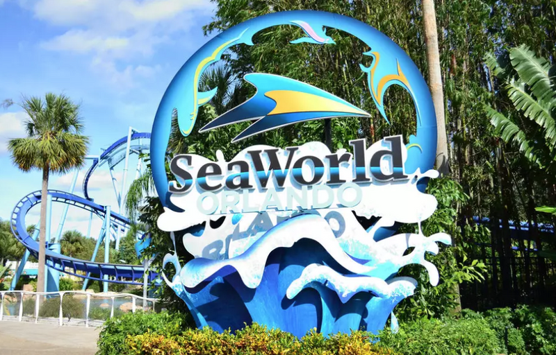 1 Day SeaWorld with FOOD - Sun Tours Orlando