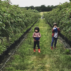 Boys picking strawberries
