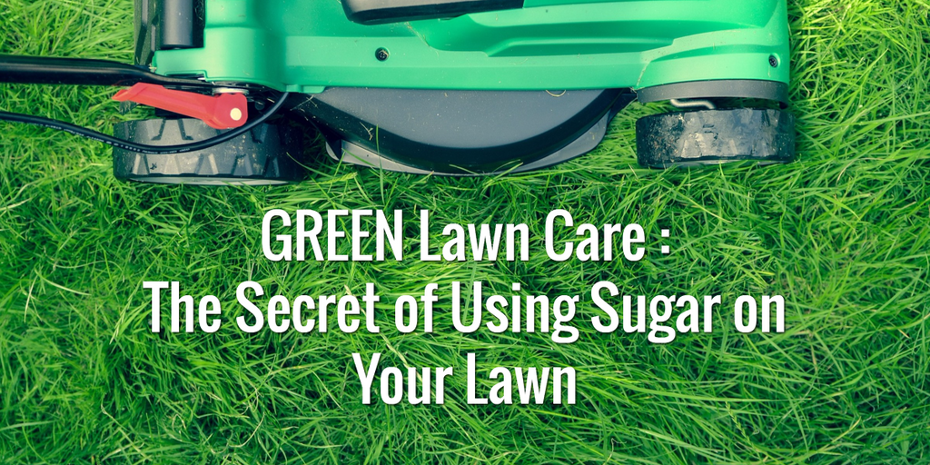 The Secret to Growing a Greener Lawn