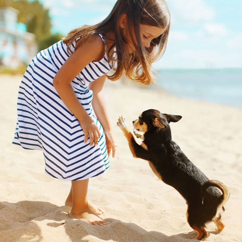 5 Ways to Keep Your Dog Safe During the Summer