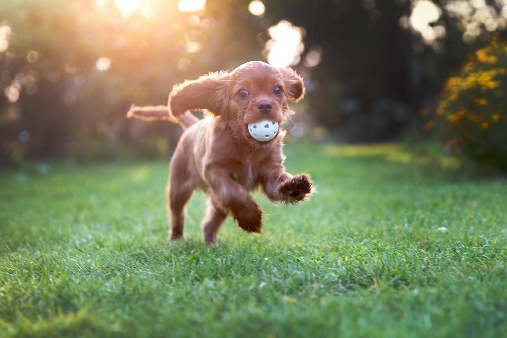 When Can I Take My Puppy To The Dog Park? Tips For First Time Dog Owners