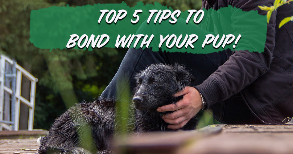 Top 5 Tips to Bond With Your Pup