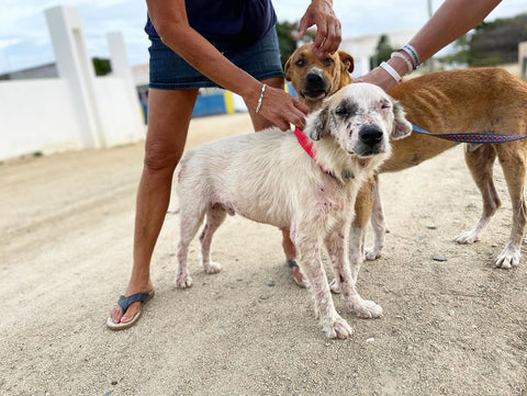 Dogs being rescued in Aruba