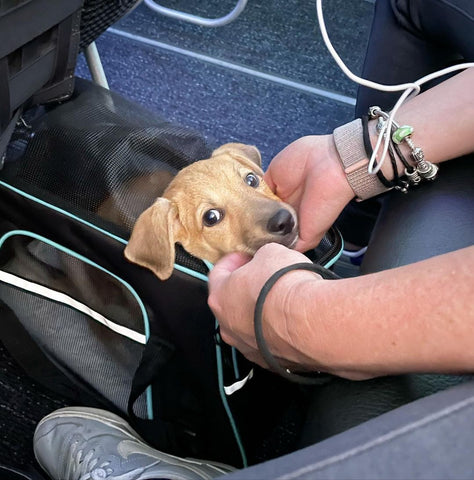 puppy in carrier traveling on air plane