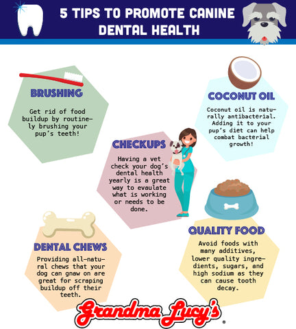5 tips to promote canine dental health