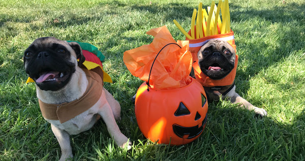 pugs dressed as a burger and french fries