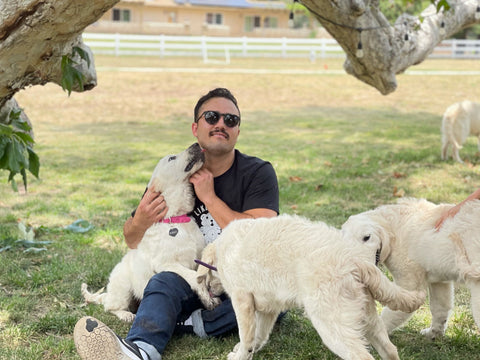 key account manager, dom, sitting with puppies