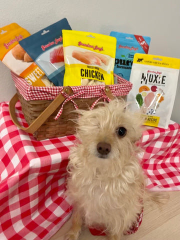 dog with picnic basket of treats