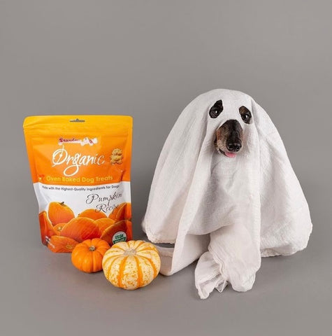 dog dressed as ghost with pumpkin and treats