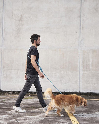 Man walking golden retriever with hands free leash