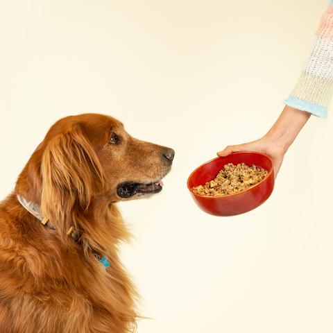 Hand holding bowl of dog food next to dog