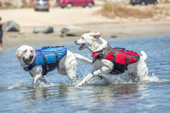 Two dogs running in water wearing blue and red life jackets