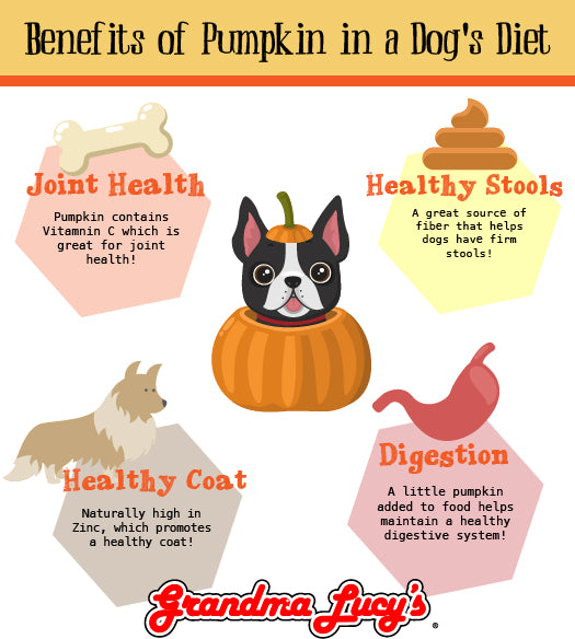 Infographic on the benefits of adding pumpkin to a dog's diet